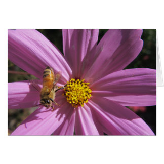 Honeybee on Cosmos Card