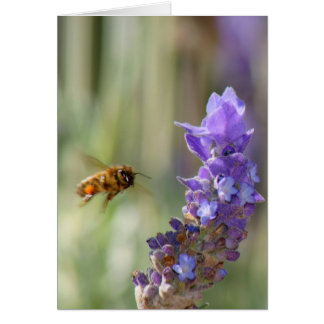 Honeybee on Lavender Card