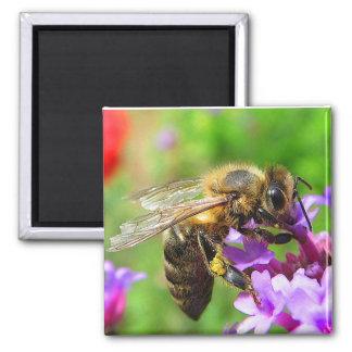 Honeybee on Verbena Nature Magnet