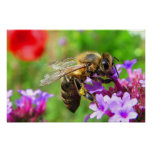 Honeybee on Verbena Poster
