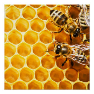 Honeycomb and Bees Pattern Design Perfect Poster