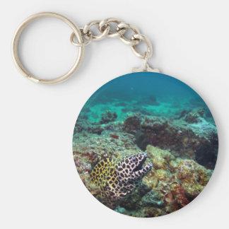 Honeycomb moray eel keychain