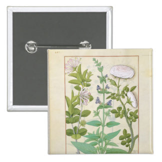 Honeysuckle, Sage and Rose 2 Inch Square Button