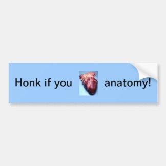 Honk if you love anatomy! bumper sticker