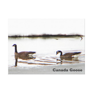 Honkers - Canada Geese Canvas Print