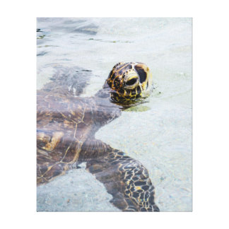 Honu Hawaiian Sea Turtle - Hawaii Turtles Stretched Canvas Prints
