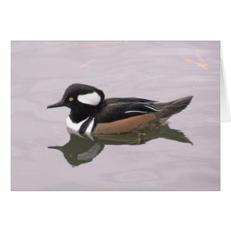 Hooded Merganser Card