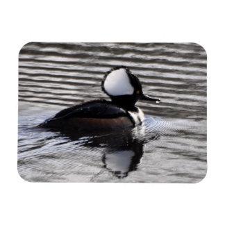 Hooded Merganser Drake Rectangular Photo Magnet