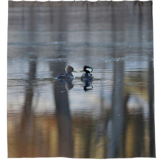 Hooded Mergansers and Pond Reflections