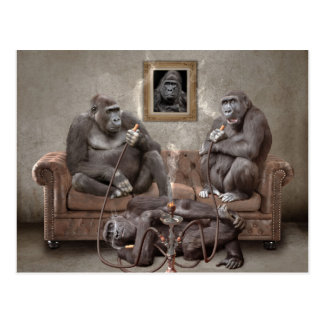 Hookah Smoking Apes Post Card