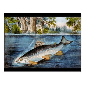 Hooked Fish Postcard