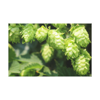 Hop Art: Wild hops for the beer lover's home Canvas Print