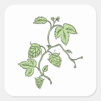 Hop Plant Climbing Drawing Square Sticker