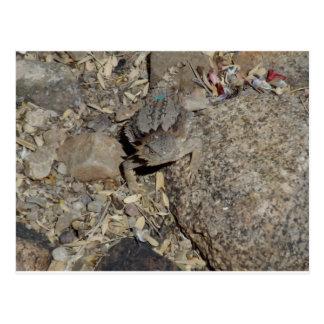 Horned Lizard Postcard