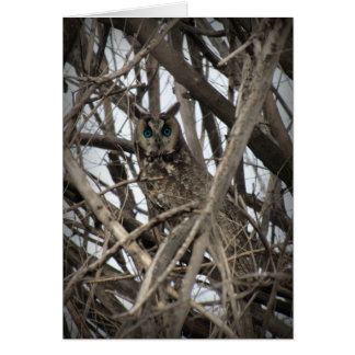 Horned Owl with Teal Eyes Card
