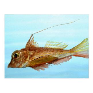 Horned searobin postcard