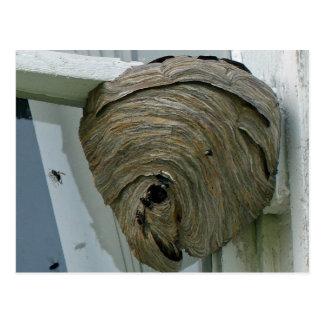 Hornets Nest Postcard