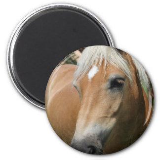 horse 2 inch round magnet