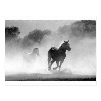 horse-430441 postcard