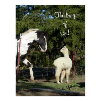 Horse Alpaca Postcard