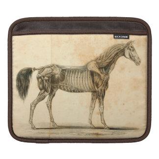 Horse Anatomy iPad Sleeve