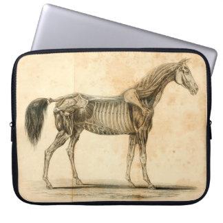 Horse Anatomy Laptop Sleeve