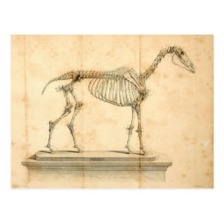 Horse Anatomy Postcard II