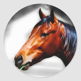 Horse and a blade of grass classic round sticker