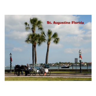 horse and carriage st augustine florida postcard