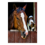 Horse and Cat Greeting Cards