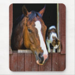Horse and Cat Mouse Pads