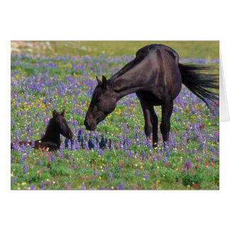 Horse and Colt in Wildflowers Field Card