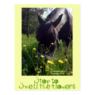 Horse and flowers postcard
