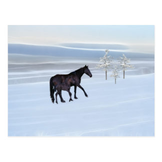 Horse and foal in snow post cards