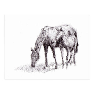 Horse and Foal Pen Drawing Postcard