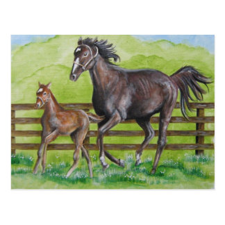 Horse and Foal  Postcard