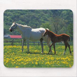 Horse and her foal standing in a field mouse pad
