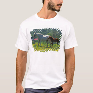 Horse and her foal standing in a field T-Shirt