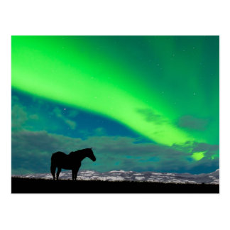 Horse and Northern Lights, Yukon Postcard