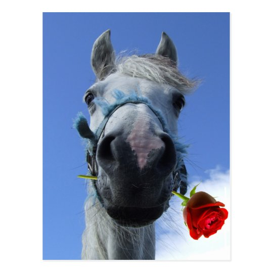 horse and rose love theme postcard