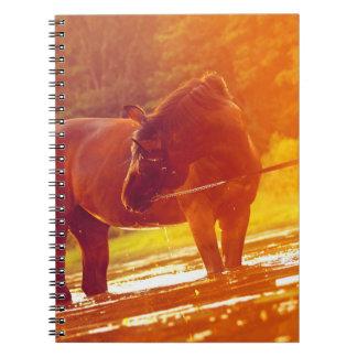 horse around sunset notebook