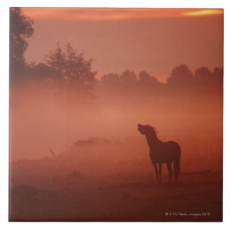 Horse at sunrise tile