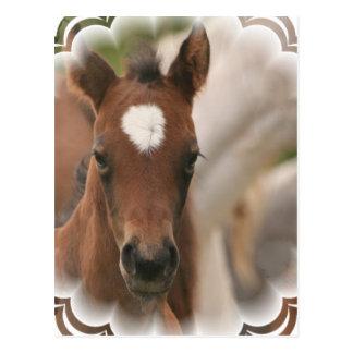 Horse Baby Postcard