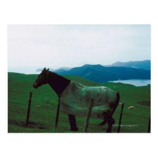Horse behind fence postcard