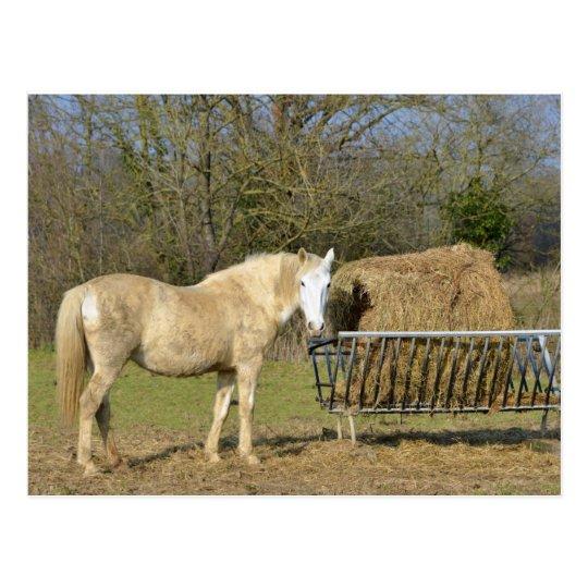 Horse beside the straw manger postcard