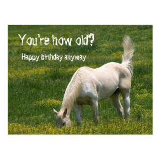 Horse Birthday Postcard