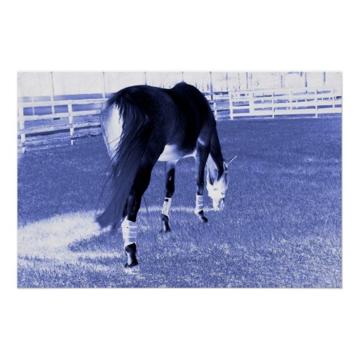 horse blue grazing in equine image poster