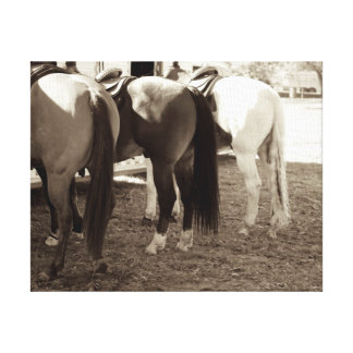 Horse Butts Canvas Photo