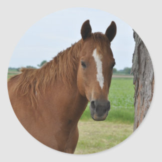 Horse by Tree Classic Round Sticker