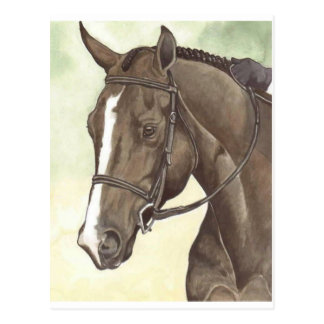 HORSE Champion Appendix QH Mare Postcard